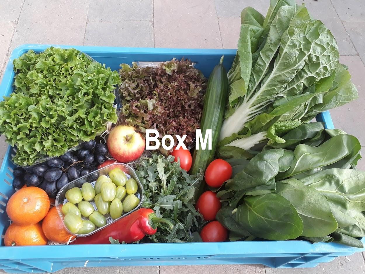 Box M