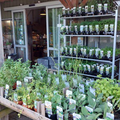 Voorkant winkel met planten