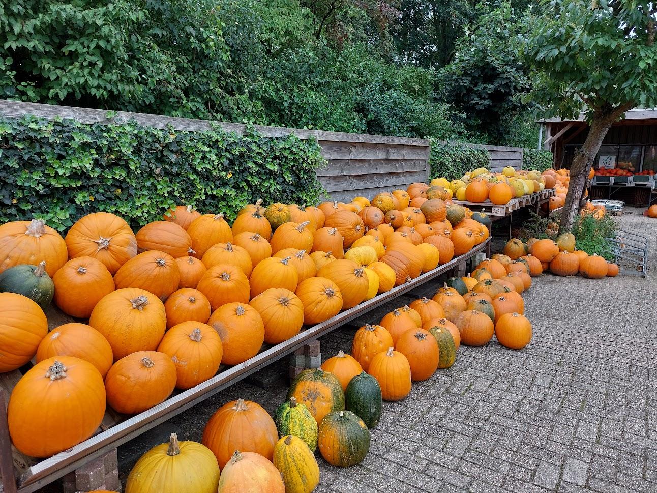 Halloween-pompoenen